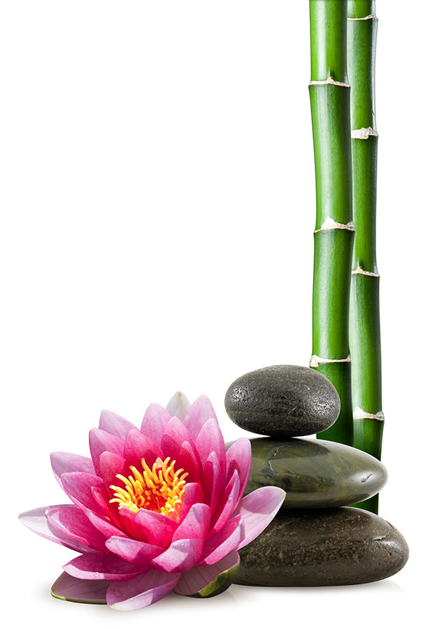Pink lotus flower, with rocks and green bamboo